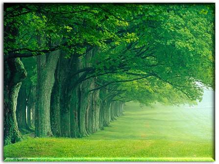 Nature Beautiful Magic In Louisville Ky
