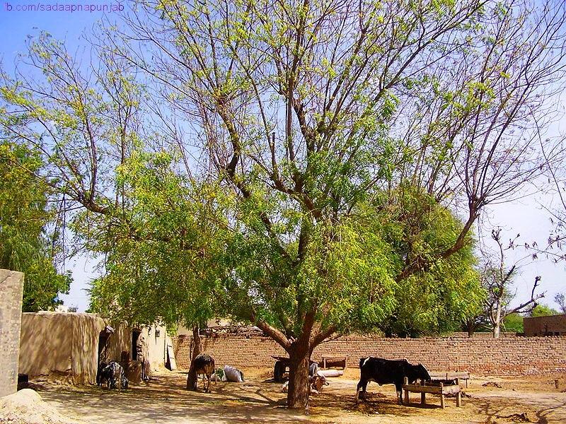 Easy essay on village life in pakistan